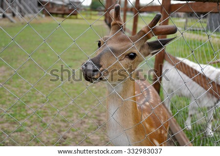 the little deer in the pavilion behind bars