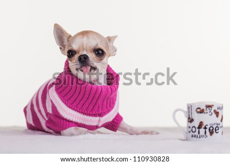The little dog have her own cup of coffee. - stock photo