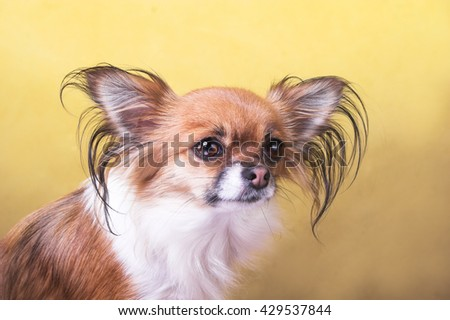 The little dog on yellow background.