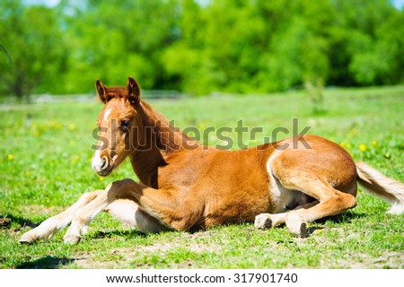 The little foal in the meadow - stock photo