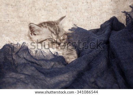 the little gray kitten sleeps on a light background