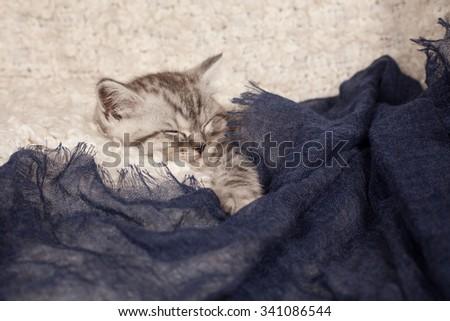 the little gray kitten sleeps on a light background  - stock photo