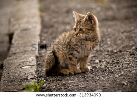 The little kitten sitting on the road in the country of Czech Republic
