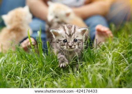 The little kitten walks purposefully forward against the child's legs