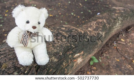 The little seated bear on old brown timber