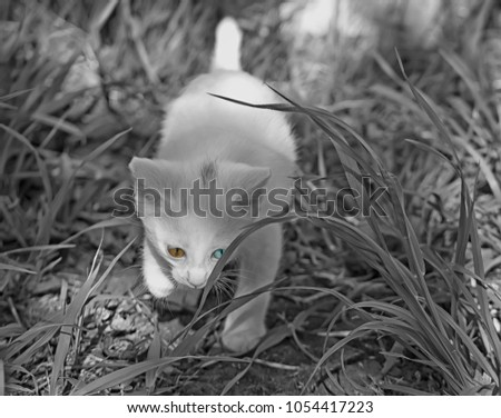 stock-photo-the-little-white-kitten-with