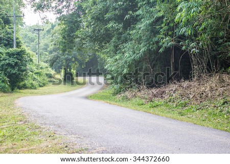 The local road in the wild wood background