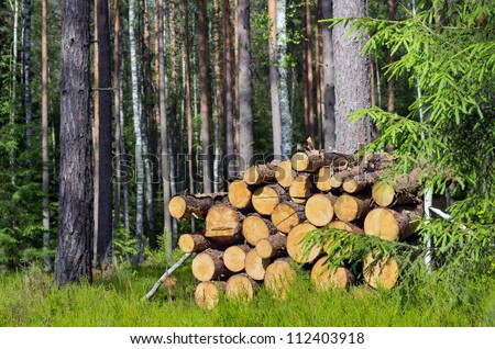 The logs laid in a stack in the wood - stock photo