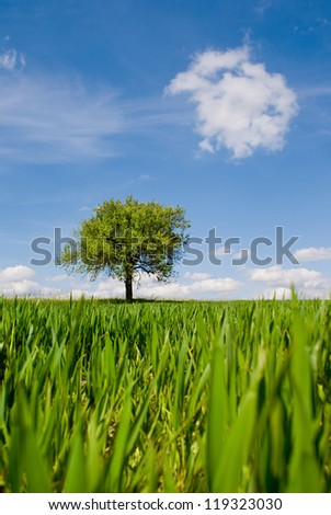 The lonely tree - stock photo