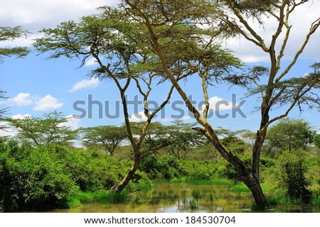 The lonely tree. Kenya, Eastern Africa - stock photo
