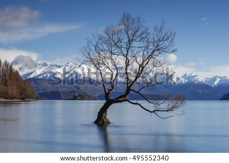 The Lonely tree of Lake Wanaka, South Island, New Zealand, at the blue morning with the snow clad Remarkables at the Backdrop