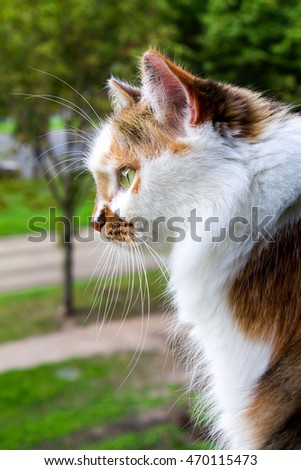 The look of a cat is directed forward, a close up of a cat