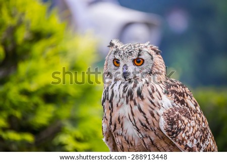 The look of an owl - stock photo