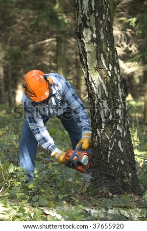 The lumberjack cutting the birch - stock photo