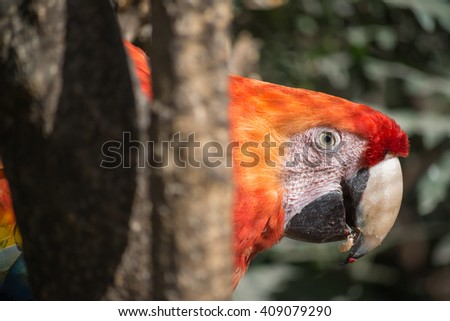 The macaw is located between tree trunks