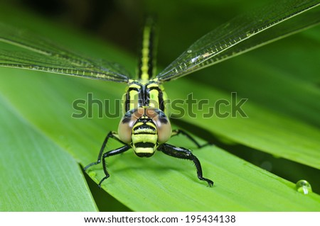 The macro features of dragonflies  - stock photo