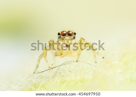 The macro photo of jumping spider in nature. - stock photo