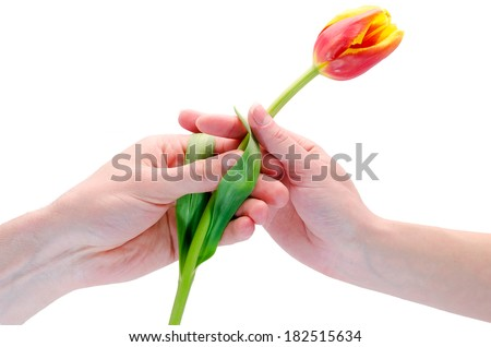 the man gives a flower to the woman - stock photo