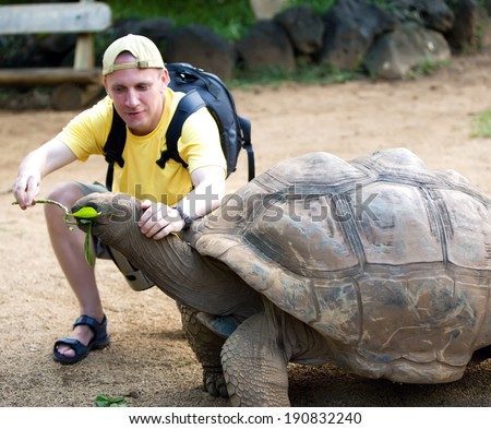 The man the tourist feeds a turtle  - stock photo