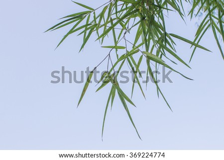 The many bamboo leaves on the blue sky background - stock photo