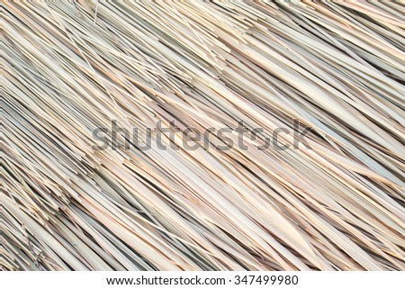 The many textures of the straw dry leaf - stock photo