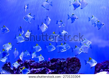 The marine life of the Indian Ocean - stock photo