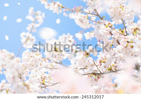 The material of a cherry tree