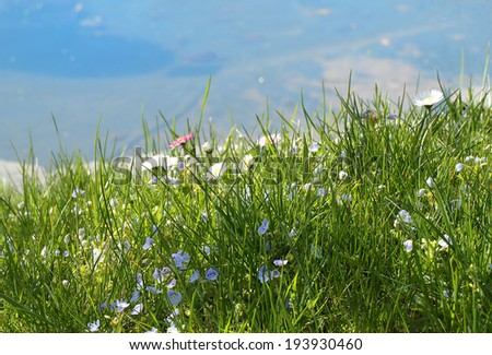 The meadow over the blue water - stock photo