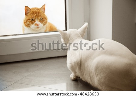 The meeting of two cats through the window - stock photo