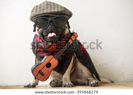 The Mexican indy guitarist musician pug dog.(Pug dog wearing Musician costume.) - stock photo