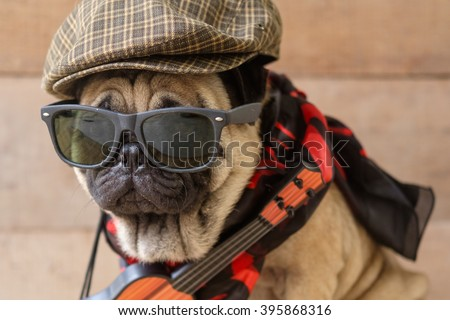 The Mexican indy guitarist musician pug dog.(Pug dog wearing Musician costume.) & Mexican Indy Guitarist Musician Pug Dog Pug Stock Photo (Royalty ...