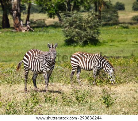 The migration of wild animals - stock photo