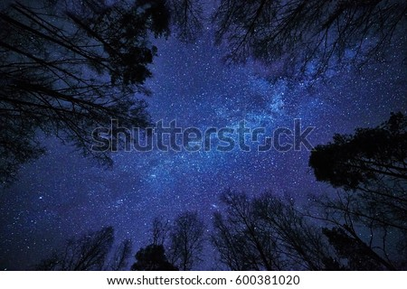 The Milky Way and deep blue night sky over the forest and trees surrounding the scene.