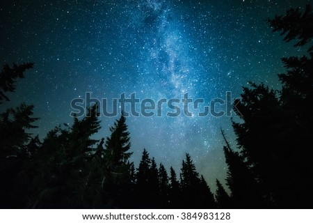 The Milky Way rises over the pine trees on a foreground - stock photo