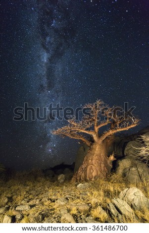 The milkyway and a baobab tree - stock photo