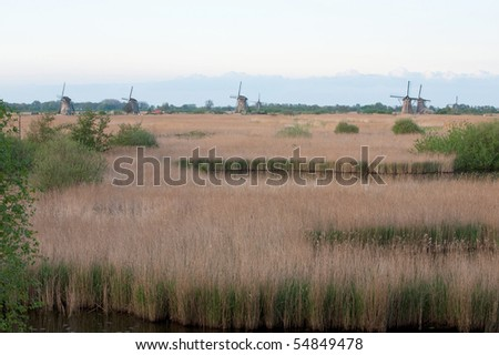 the mills of kinderdijk with reed in front