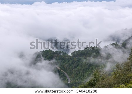 The Mist at Tropical Rain Forest in Doi Ang Khang , Chiangmai Province, Thailand