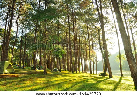 The Misty pine forest at North of Thailand, camping during holidays - stock photo
