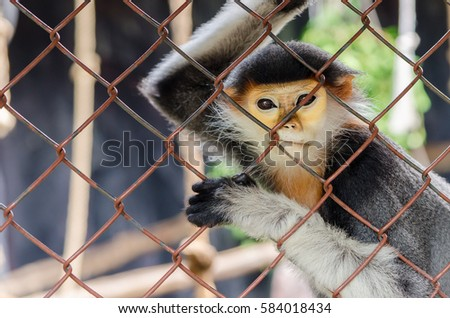 the monkey sit behind grille