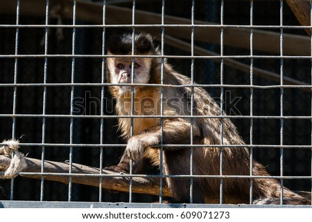 The monkey sits in a cage of the zoo