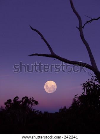 The Moon Rising - stock photo