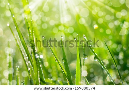 The morning dew. Abstract background of shining a bright morning dew. - stock photo