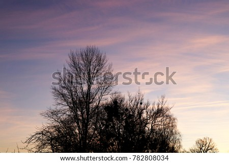 The morning sunset with trees and dawn in the backlight
