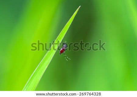 The mosquito on grass in garden  - stock photo
