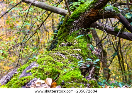 The moss on the tree trunk - stock photo