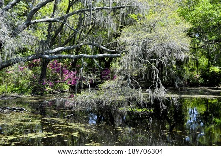 The most beautiful swamp - stock photo