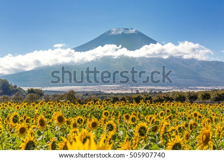 The Mount Fuji of the first snowcap and sunflower