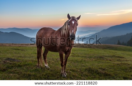 The Mountain landscape with grazing horse, Ukraine - stock photo