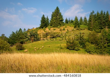 The mountain meadows and a flock of sheep, National park Tara
