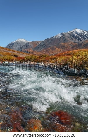 the mountain river in a small bush and stones